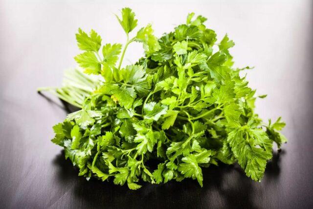 le cerfeuil, est une herbe aromatique qui présente de nombreuses vertus médicinales