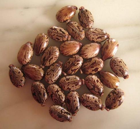 Les bienfaits de l'huile de carapate pour la peau